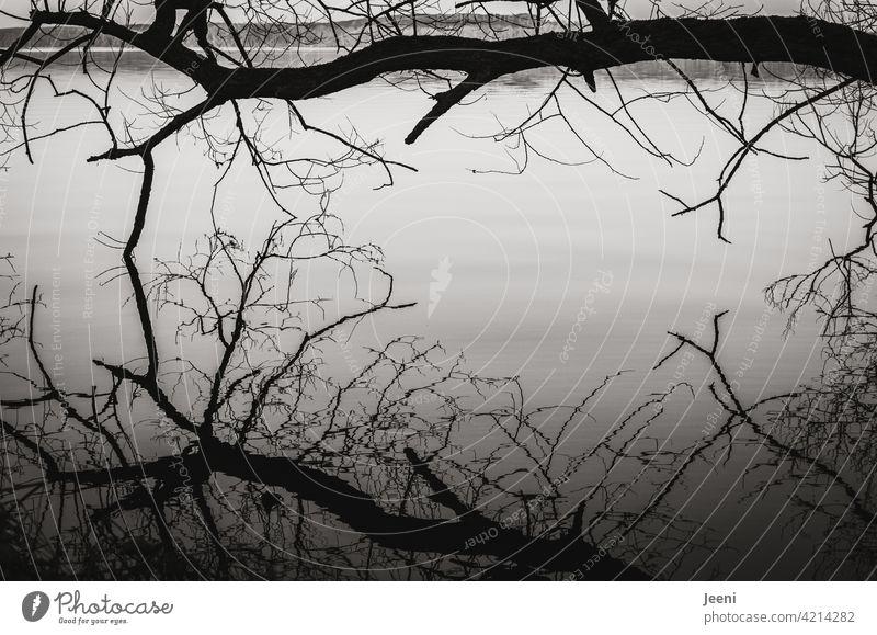 Kahler Baum über dem See mit Spiegelung in der glatten Wasseroberfläche Spiegelung im Wasser Stimmung ruhig ruhen Ruhe Licht Landschaft Reflexion & Spiegelung