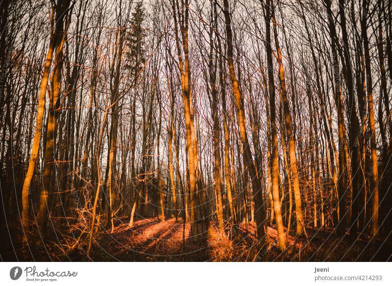 Lichtdurchfluteter Herbstwald Wald herbstlich Herbstlaub Herbstfärbung Herbstbeginn Herbstwetter Herbstlandschaft Herbststimmung Herbstgefühle Laubwerk Färbung