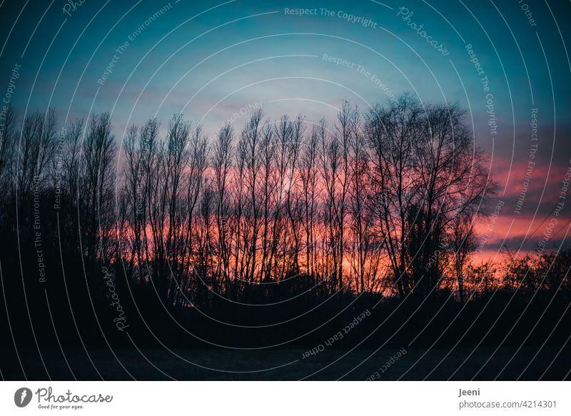 Abendhimmel hinter kahlen Bäumen Himmel Abenddämmerung abendhimmel Sonnenuntergang Sonnenuntergangshimmel Sonnenuntergangsstimmung Dämmerung dämmern Dämmerlicht