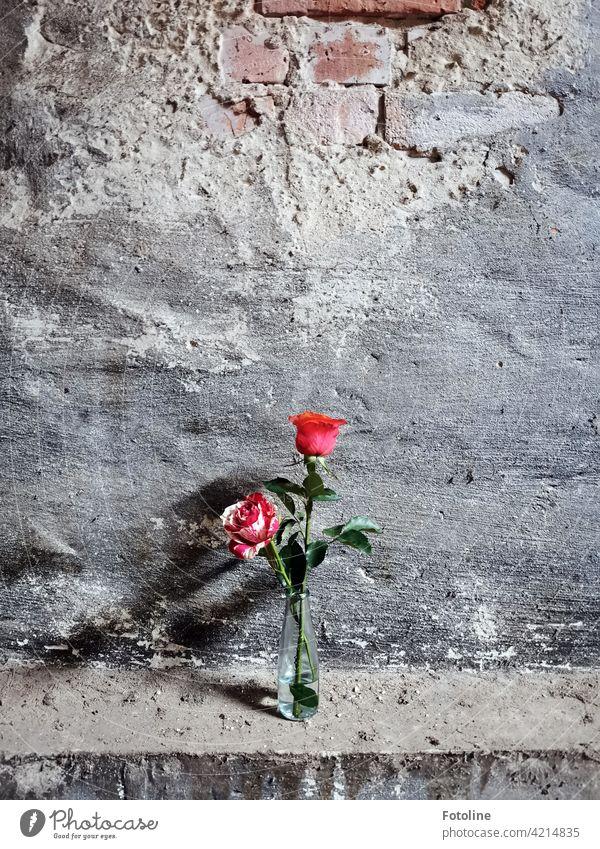 Zwei Rosen verschönern einen Lost Place lost places Verfall Vergangenheit Vergänglichkeit alt Wandel & Veränderung kaputt Zahn der Zeit verfallen Architektur