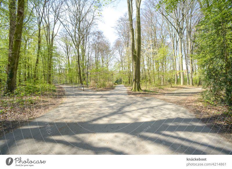 wege Wege & Pfade Baum Wald grün Farbfoto Natur Menschenleer