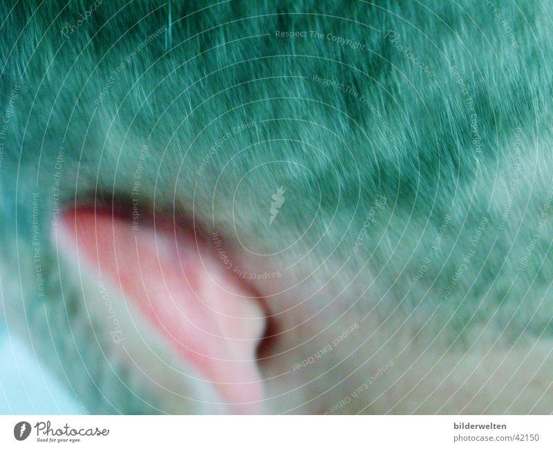 Klugerkopf Mensch Denken Ohr Hinterkopf