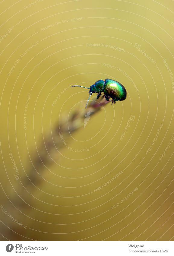 Nugget 2 Natur grün Erholung Tier Umwelt Wiese Garten fliegen Park Zufriedenheit Gleichgewicht Fressen Käfer