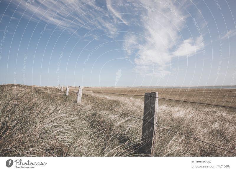 dry grassland Landschaft Pflanze Tier Himmel Horizont Sommer Schönes Wetter Dürre Gras Sträucher Farn Wildpflanze Wiese Feld Küste Nordsee Meer Wärme
