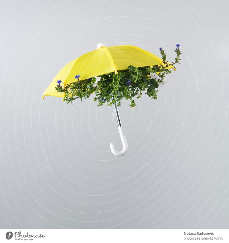 Frühling Blume blühen innerhalb gelben Regenschirm isoliert auf hellgrauem Hintergrund angeordnet. Quadrat Ästhetik Kunst Herbst schön Blütezeit Farbe