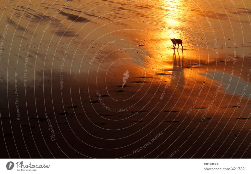 Strandhund Hund Ferien & Urlaub & Reisen Wasser Sommer Sonne Meer Erholung Tier gelb Küste Freiheit Sand gehen gold laufen