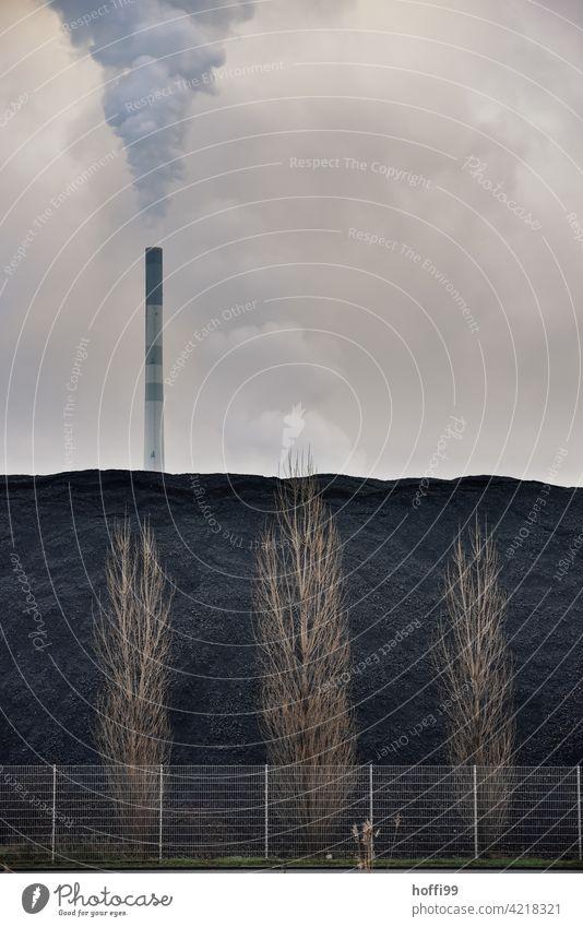 eingezäunte laublose Bäume vor Kohlenhalde und großem Schornstein mit viel Emission Stromkraftwerke Heizkraftwerk Elektrizität Klimawandel Kohlekraftwerk Umwelt