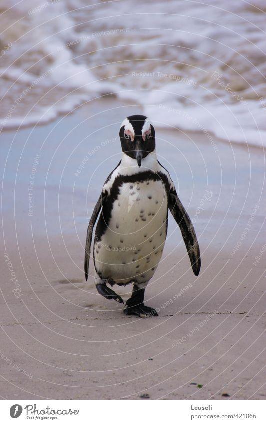 Gestrandet? Ferien & Urlaub & Reisen Strand Landschaft Schönes Wetter Insel Wildtier 1 Tier Bewegung Gedeckte Farben Außenaufnahme Menschenleer Tag