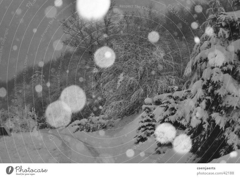 Schnee weiß Winter kalt Eis Glätte Schneeflocke Schneematsch