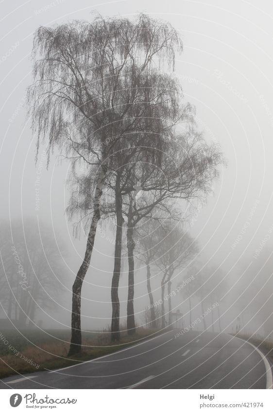 Morgennebel... Umwelt Natur Landschaft Pflanze Winter Nebel Baum Verkehrswege Straße stehen authentisch dunkel natürlich grau schwarz weiß Stimmung ruhig
