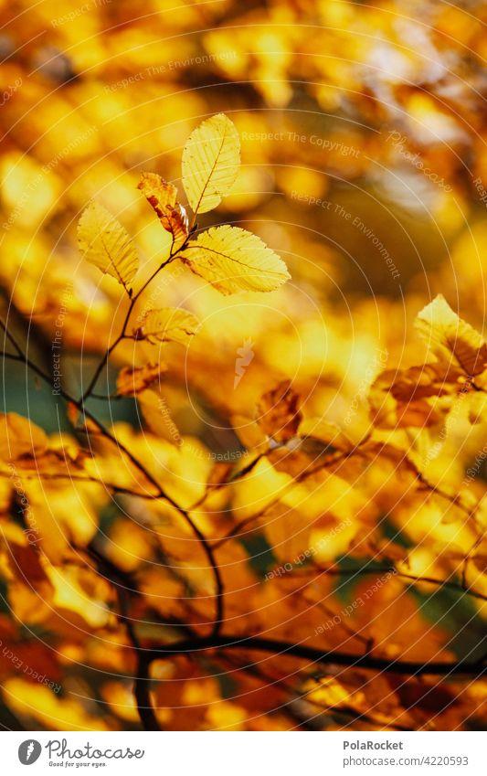 #A0# Herbstgold Außenaufnahme Herbstwetter Herbstlaub positiv Spaziergang draußensein Natur Herbststimmung Herbstlandschaft Herbstwald Herbstbeginn