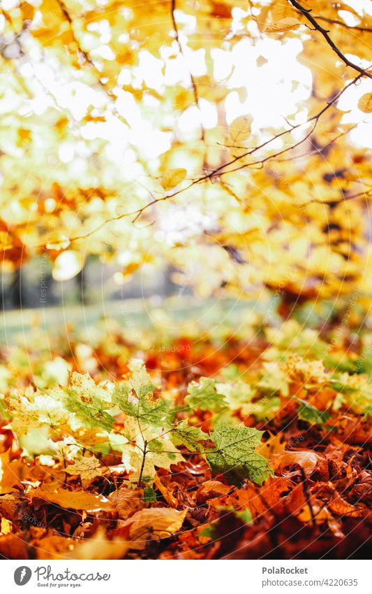 #A0# Herbstgelb Naturliebe Naturerlebnis laub herbst herbstlich Herbstfärbung Herbstbeginn Herbstwald Herbstlandschaft Herbststimmung draußen draußensein