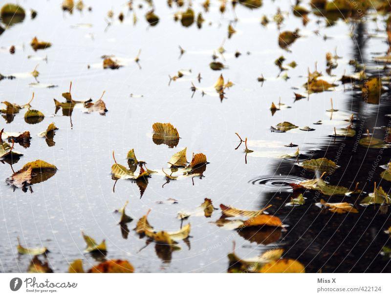 der Herbst Wasser Wetter schlechtes Wetter Unwetter Regen Blatt fallen kalt nass Ende Endzeitstimmung Vergänglichkeit Herbstlaub herbstlich Herbstbeginn