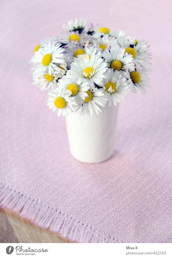 Blümchen Dekoration & Verzierung Blume Blüte Blühend Blumenstrauß Blumenvase Tischwäsche Tischdekoration Gänseblümchen klein gepflückt Liebesbekundung Geschenk