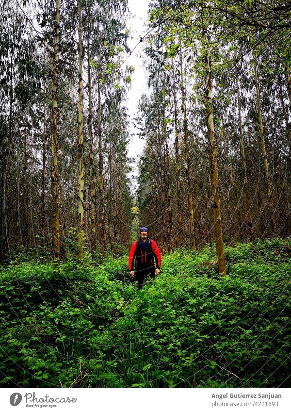 Person umgeben von hohen grünen Bäumen Baum männlich Erwachsener Natur im Freien Wald Errungenschaft Ehrfurcht horizontal Mann jung Lifestyle Kaukasier Porträt