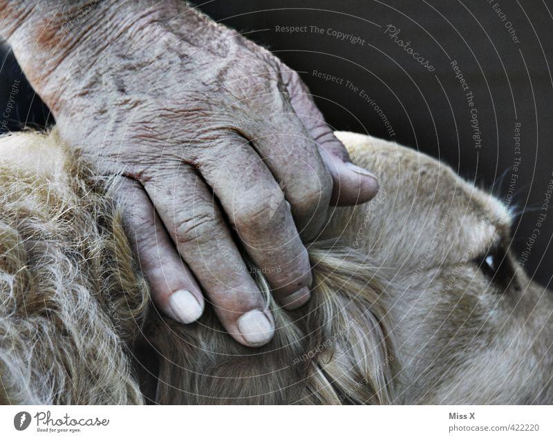 Eco und Umberto Hund Mensch Hand Tier Senior Gefühle Freundschaft Zusammensein 60 und älter Finger Schutz Männlicher Senior Haustier Geborgenheit Sympathie