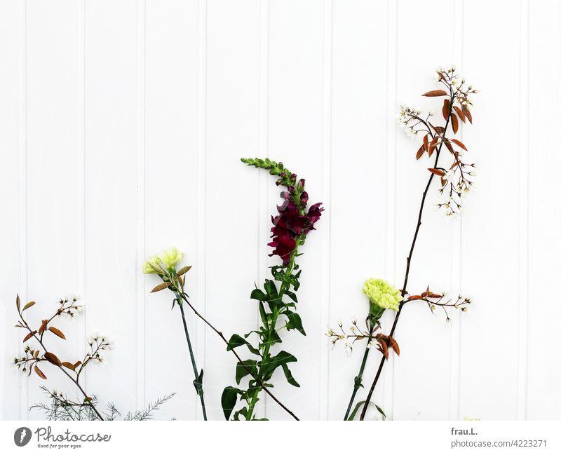 Wartende Blumen Löwenmäulchen Nelke Felsenbirne Pflanze Frühling Holzwand