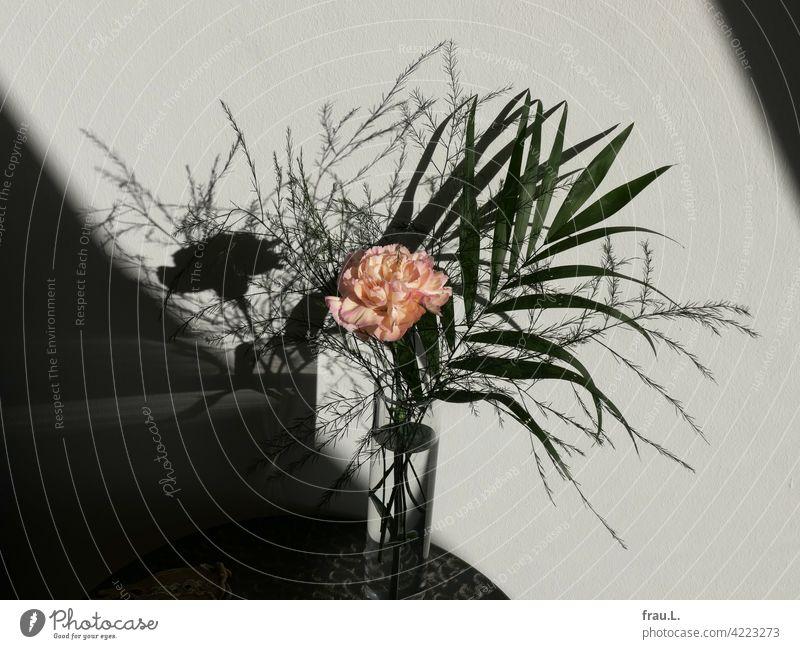Eine Nelke mit viel Trara Blume Pflanze Schatten Asparagus Vase Blumenstrauß Blüte rosa
