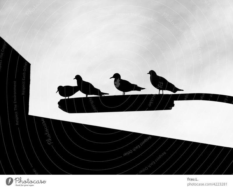 4 Möwen auf 1 Straßenlampe Laterne Straßenlaterne Himmel Haus Vogel Vögel Kontrast Stadt