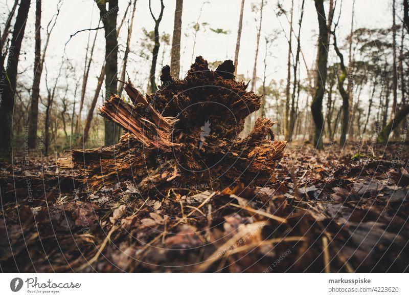 Baumstamm Wurzelstock wurzelstock Forstwirtschaft Forstwald Forstarbeit Waldboden Naturverbundenheit Naturverjüngung