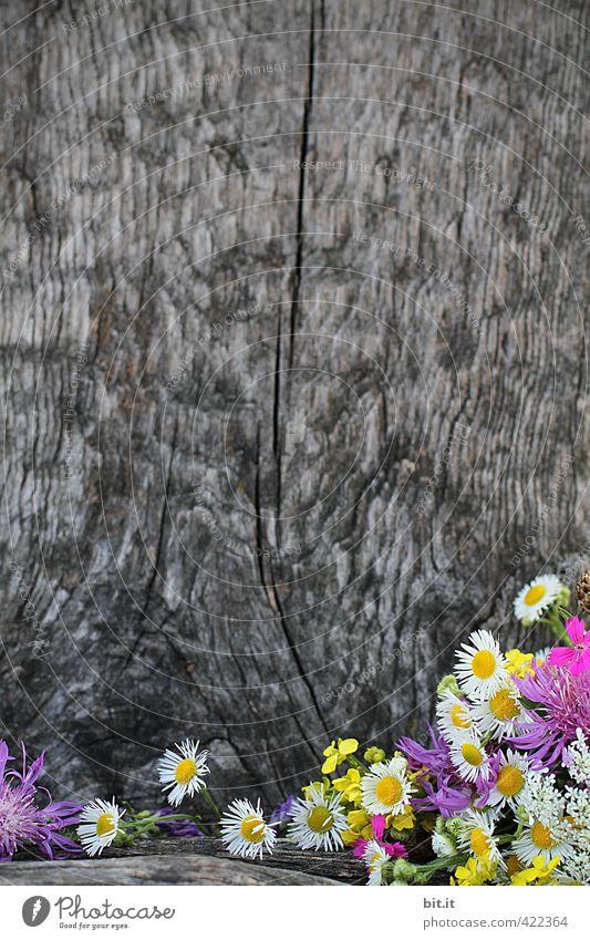 Blumenstadel Natur schön Pflanze Sommer Herbst Frühling Blüte Holz Glück natürlich Hintergrundbild Häusliches Leben Geburtstag Dekoration & Verzierung Blühend