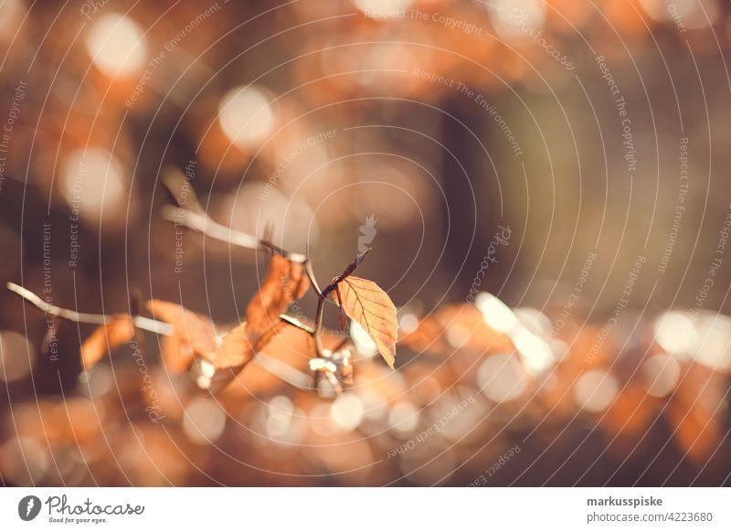 Herbstliche Hintergrundbeleuchtung Blätter Bokeh abschließen Konifere Koniferenwald Nadelwald Aushärten geschnitten dichter Wald trocknen Tannenzweig