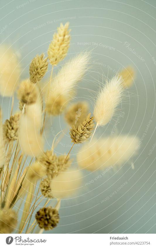 Dekoration aus trockenen Gräsern und Blumen als Detailaufnahme Dekoration & Verzierung dekorativ Nahaufnahme Innenaufnahme Menschenleer ganzjährig haltbar