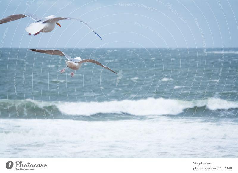Abflug! Ferien & Urlaub & Reisen blau Wasser Meer Wolken Tier Strand Ferne kalt Leben Bewegung Küste Freiheit Horizont Luft Vogel