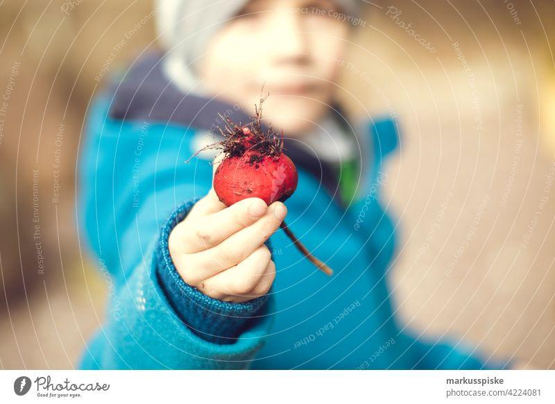 Selbstversorgung Radieschen Ernte Essen ernten Garten Gartenarbeit Gartenbau Nahrung Nahrungsmittel Erde humus Kind Kindheit Erfahrung Bildung Landwirtschaft