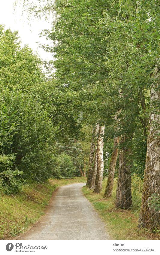 Weg, gesäumt von Wiese, grünen Büschen und Laubbäumen / Ausflug / aktive Erholung Landstraße kurvig Kurve Laubbaum Ahorn Blätter Busch üppig Rasen Sommer Ruhe