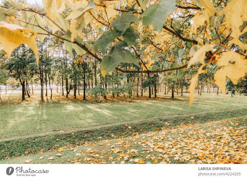 Schöne Herbstlandschaft mit gelben Bäumen, trockene orange Blätter und Sonnenstrahlen. Buntes Laub im Stadtpark. Fallende Blätter auf natürlichem Hintergrund