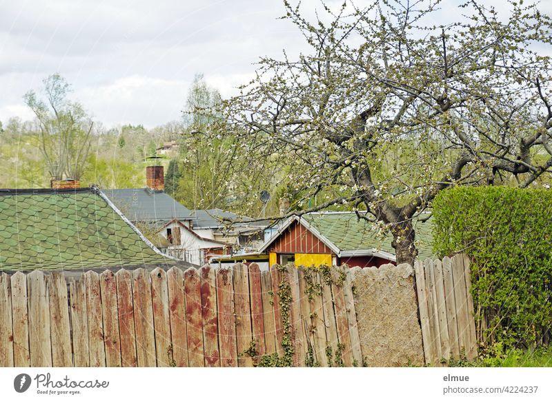 Blick über einen geschlossenen Holzzaun in eine Kleingartenanlage mit Lauben und Bäumen im Frühjahr / Schrebergarten / Freizeit Heimgarten Datsche