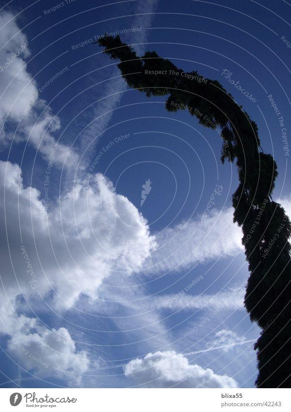 bedrohlich ... Wolken Kondensstreifen Sonne Wolkendecke bedrohlich wirkend himmelsspiel