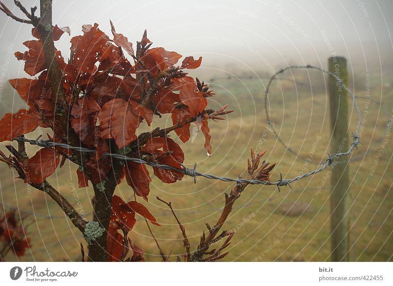 gefangen im Nebel Natur Pflanze Einsamkeit Landschaft Blatt Winter dunkel Umwelt Wiese Herbst Traurigkeit Regen Feld Nebel Klima Sträucher