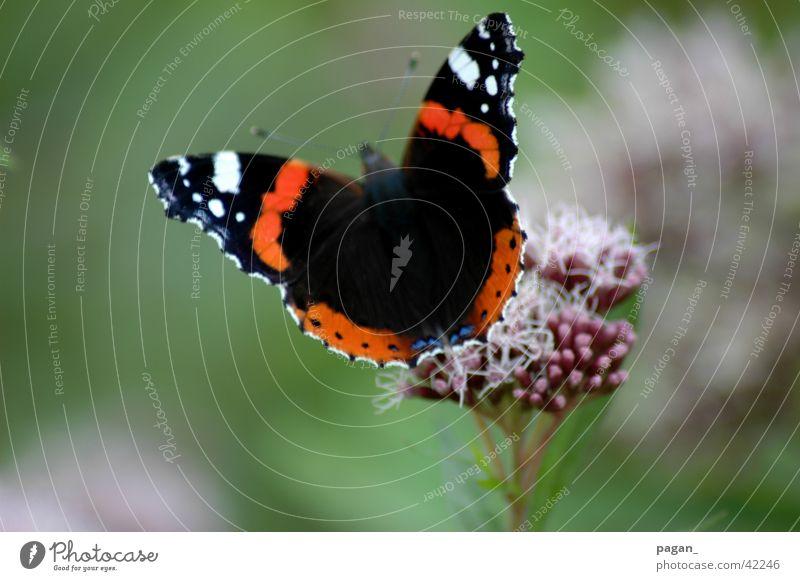 Schmetterling Blume Makroaufnahme Detailaufnahme