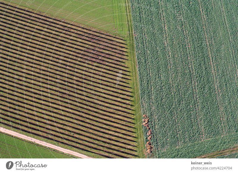Ackerland aus der Vogelperspektive acre Land Ackerboden Muster grün braun Furchen Linien Feld Bereiche Ackerbau Landschaft Natur Umwelt Wachstum Außenaufnahme
