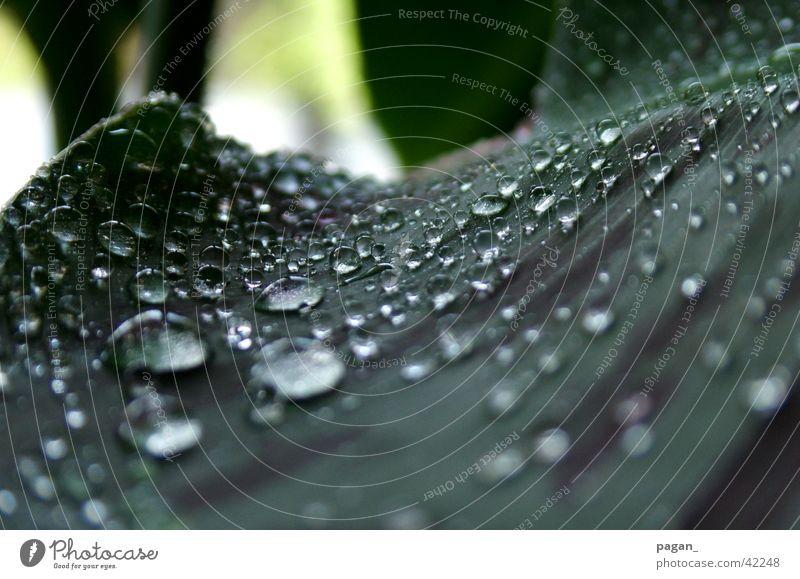 Morgentau? Wasser Pflanze Blatt Regen Wassertropfen