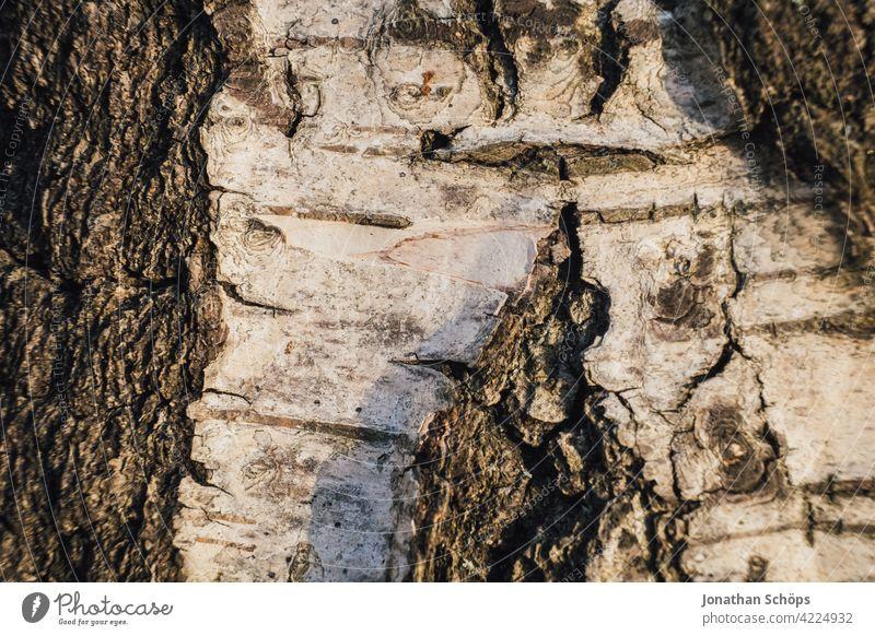 Bikenrinde Nahaufnahme Baum Holz braun Baumrinde Strukturen & Formen Makroaufnahme Riss Menschenleer Tag Farbfoto Detailaufnahme Furche Baumstamm Außenaufnahme