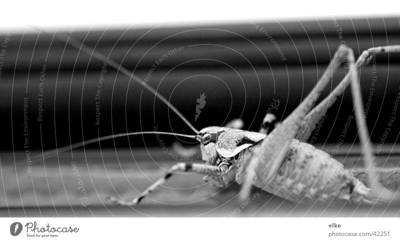 flip in weile Tier Heuschrecke Verkehr Natur Makroaufnahme Erholung