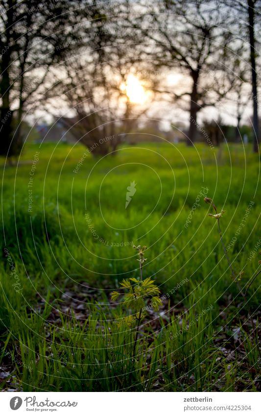 Abenddämmerung im Frühling mit Wiese und Bäumen und so abend ast baum dunkel erholung erwachen ferien frühjahr frühling frühlingserwachen garten himmel