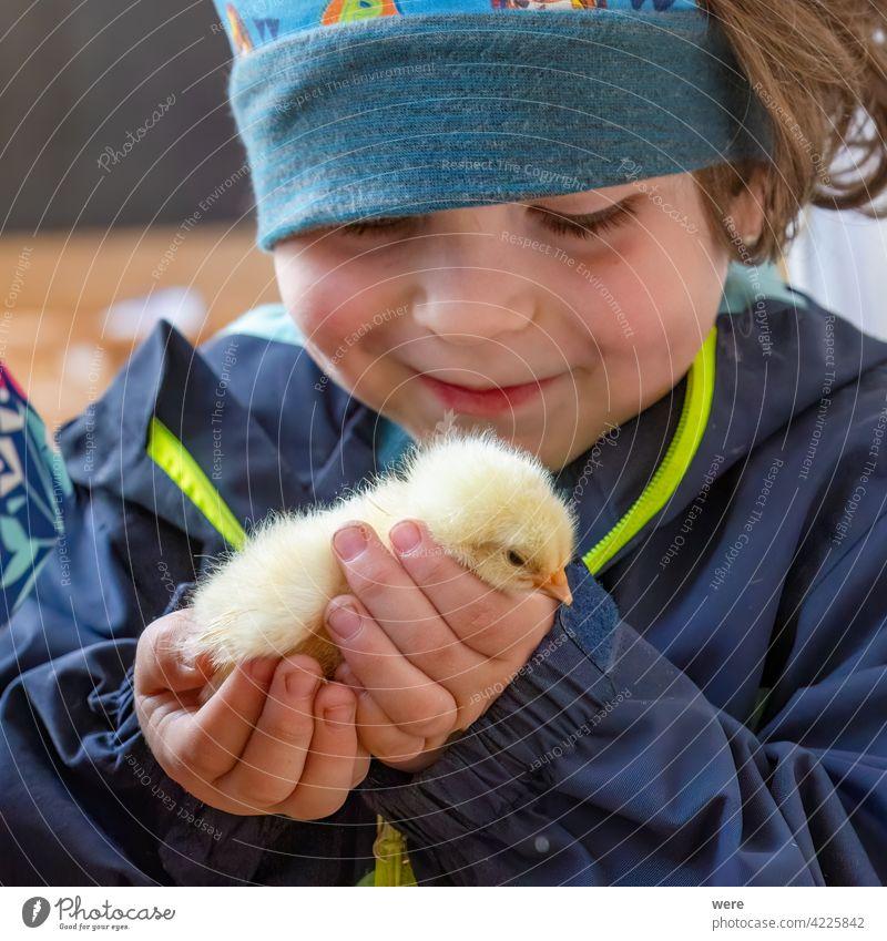 Ein  Kind hält zärtlich ein Küken in seiner Hand Kaukasich Freude Junge Glück Kindheit staunen Naturerlebnis Farbfoto Mensch 3-8 Jahre Kleinkind Leben