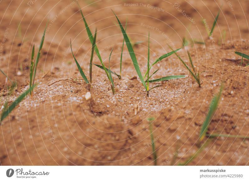 Aussaat Saat Saatgut Saatgutparzelle Landwirtschaft Ackerbau Ackerland Ackerboden Ackerpflanze Ackerwirtschaft Ackerpflanzen Getreide Boden humus Blüte