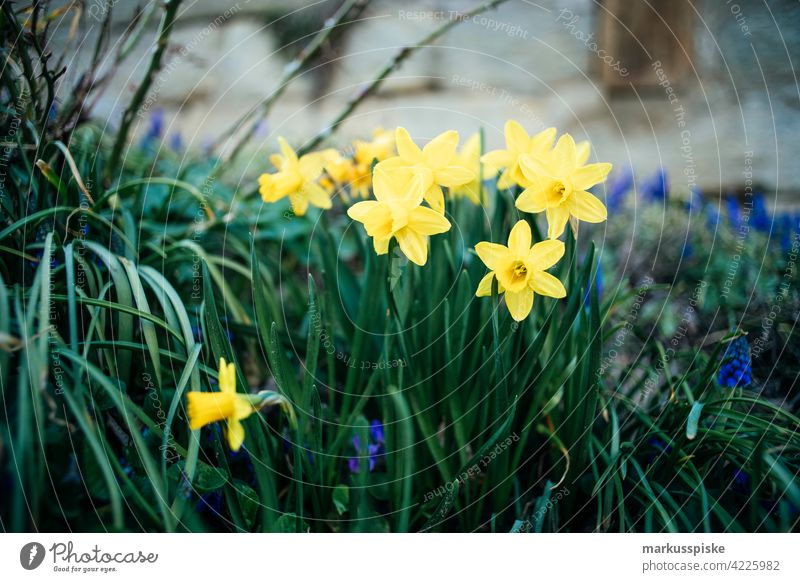 bunte Frühlingsblumen im Freien schön Schönheit Farbenpracht Blütezeit Bokeh hell braun Haufen Nahaufnahme farbenfroh Landschaft Phantasie Flora geblümt Blume
