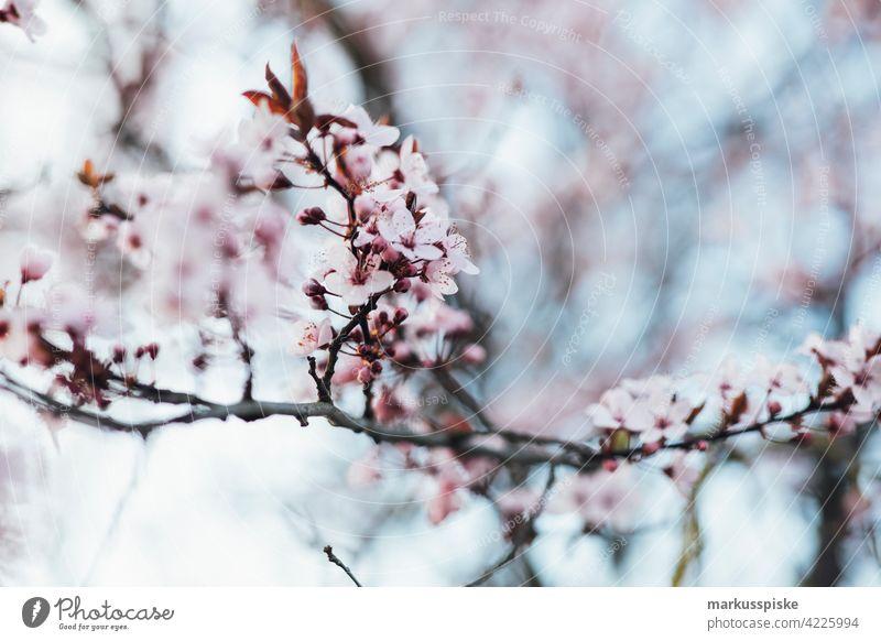 Bunte Frühlingsblüte schön Schönheit Farbenpracht Blütezeit Bokeh hell braun Haufen Nahaufnahme farbenfroh Landschaft Phantasie Flora geblümt Blume Blumen