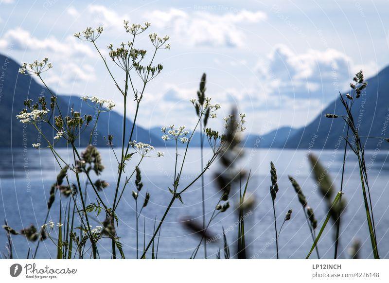 Blick auf einen Fjord norwegen fjord fluß Berge u. Gebirge Natur Skandinavien Ferien & Urlaub & Reisen Pflanzen Tourismus Wasser Erholung Idylle Landschaft