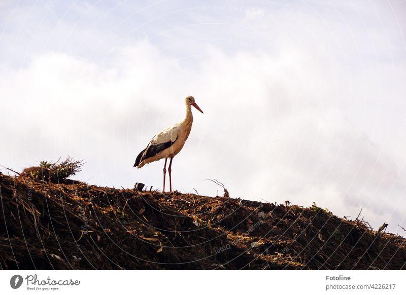 Kalif Storch - wie war noch mal das Zauberwort für die Rückverwandlung Vögel Vogel Tier Außenaufnahme Farbfoto Wildtier Natur Tag Menschenleer Umwelt weiß