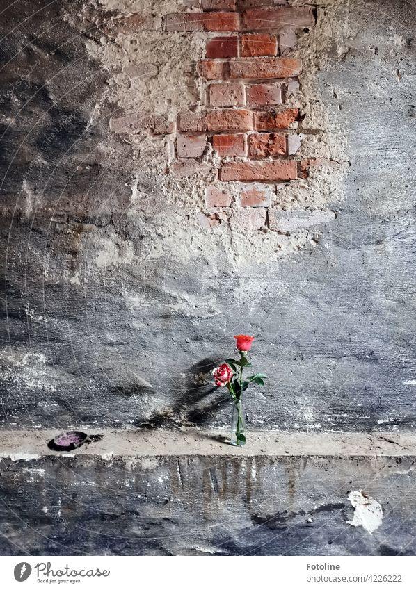 Ein lange verlassener Ort wurde von Bellaluna mit 2 Rosen aufgepimpt. lost places Verfall Vergangenheit Vergänglichkeit alt Wandel & Veränderung kaputt