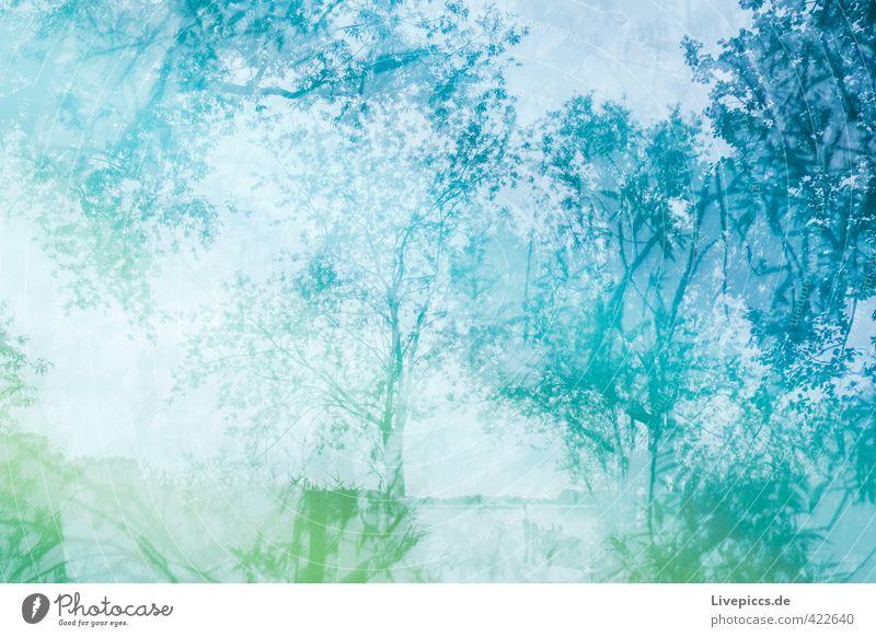 crazy summer Umwelt Natur Landschaft Pflanze Wasser Himmel Wolken Sommer Baum Sträucher Blatt Wildpflanze Seeufer Strand Teich verrückt trashig blau grün