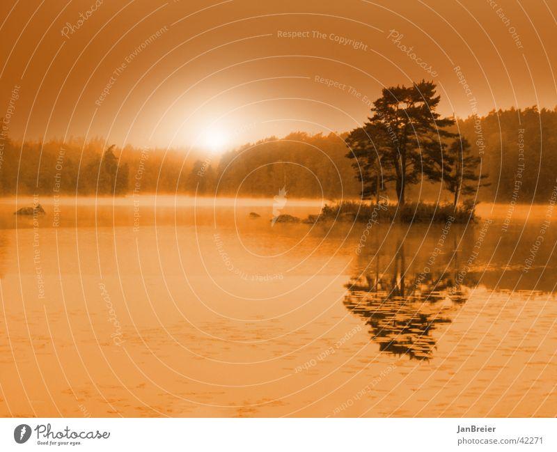 Schwedischer Morgen Baum See Insel Sonnenaufgang Idylle Schweden
