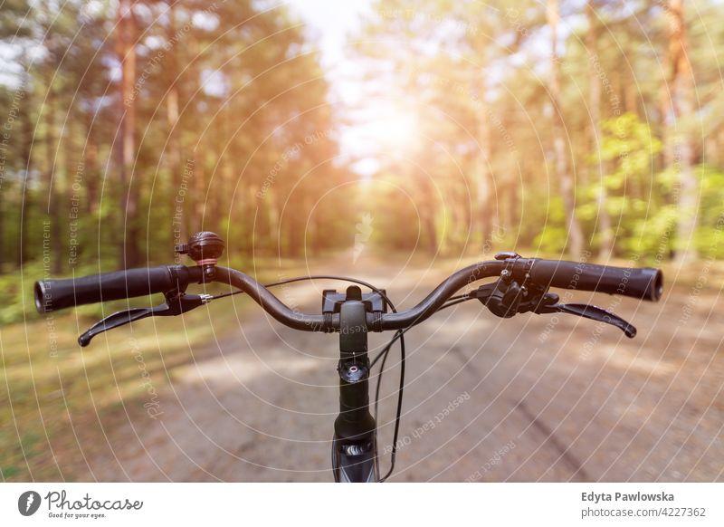Fahrrad im Herbstwald Sommer Natur Wald wild grün im Freien Wildnis Pflanze Baum Tag Ruhe tagsüber Weg von all dem Outdoor-Veranstaltung Freiheit Wunder Lust